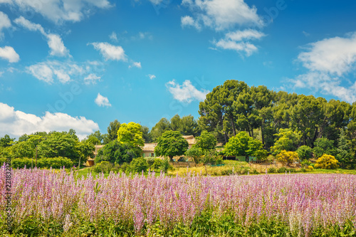 Tuinposter Purper The flowering of lavender in Provence. France. Focus concept.