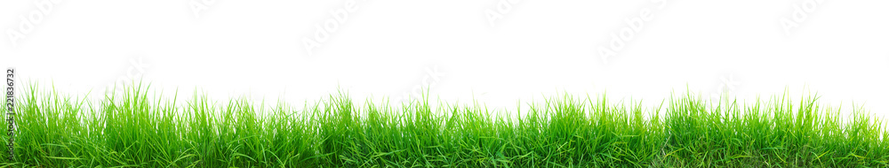 Fototapeta green grass panorama isolated on white