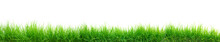 Green Grass Panorama Isolated On White