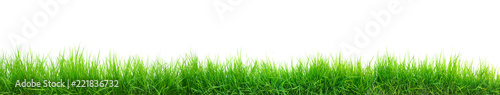 Obraz green grass panorama isolated on white - fototapety do salonu