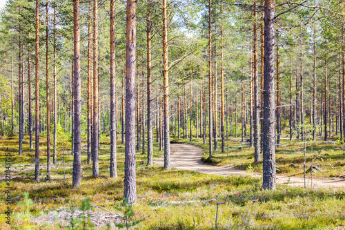 Photo Stands Road in forest Autumn forest view from Sotkamo, Finland.