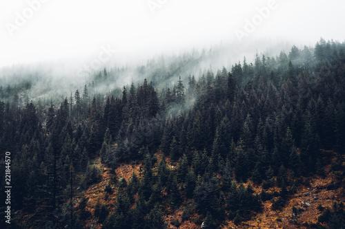 Foto op Aluminium Landschappen MIsty Forest