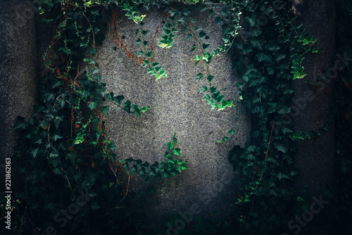 Fotografija Old grunge stone wall texture and pattern background covered in green ivy for ha