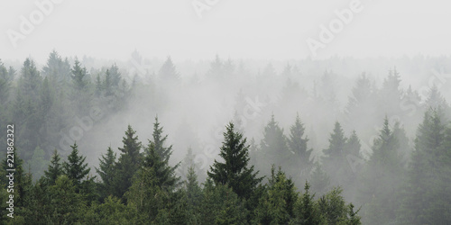 Cuadros en Lienzo Panoramic landscape view of spruce forest in the fog in the rainy weather