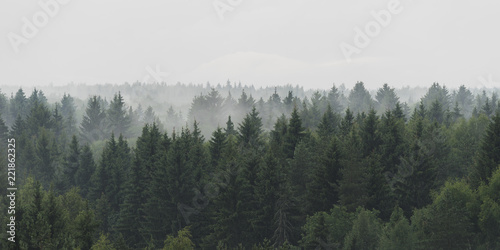 Photo sur Aluminium Foret Panoramic landscape view of spruce forest in the fog in the rainy weather
