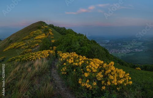 Foto op Aluminium Blauwe jeans Summer dawn with yellow flowers. Rhododendron yellow in the mountains. Blossoming rhododendron on Mount Beshtau.
