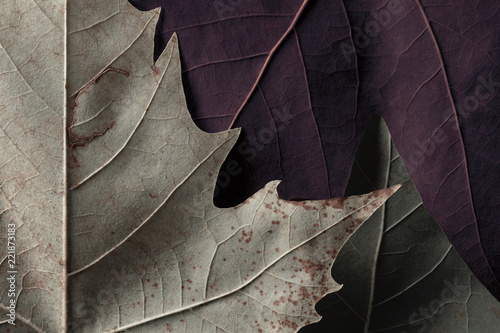 Colorful leaves of trees, nature texture background - 221873183