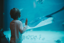 Young Boy Staring At Big Fish In Oceanarium