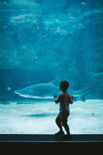 Excited Boy Watching A Shark In Zoo