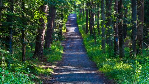 Tuinposter Weg in bos SONY DSC