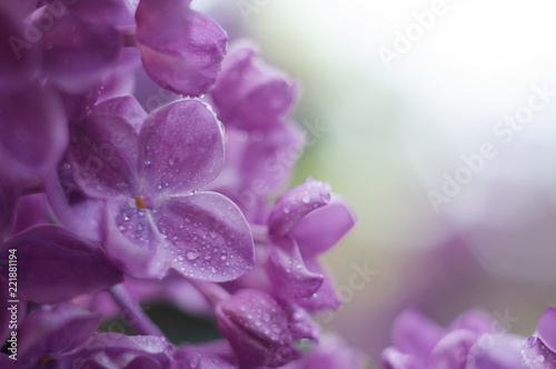Foto op Canvas Lilac Floral border with beautiful purple lilac blooming in the sunny day. Romantic banner with flowers and bokeh background