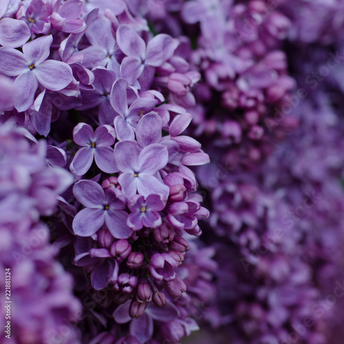 Fotobehang Lilac Close up picture of bright violet lilac flowers. Abstract romantic floral background.