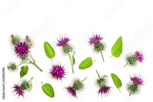 Burdock flower isolated on white background with copy space for your text Fototapeta