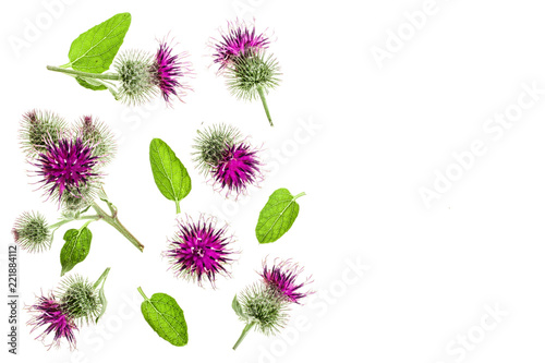 Carta da parati Burdock flower isolated on white background with copy space for your text
