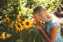 Woman Smelling Sunflower In Th...