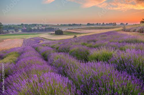 Obraz Kwitnące pola lawendy w Polsce, kolorowy wschód słońca - fototapety do salonu