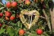 Ein Herz im Apfelbaum