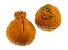 Sumo Citrus Or Dekopon Mandarin