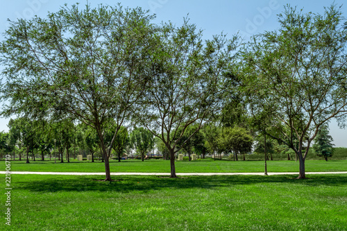 City Park In Southern California with green grass and walkway Canvas Print