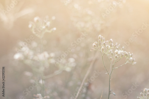 Fototapety, obrazy: Forest meadow with wild grasses,Macro image with small depth of field,Blur background