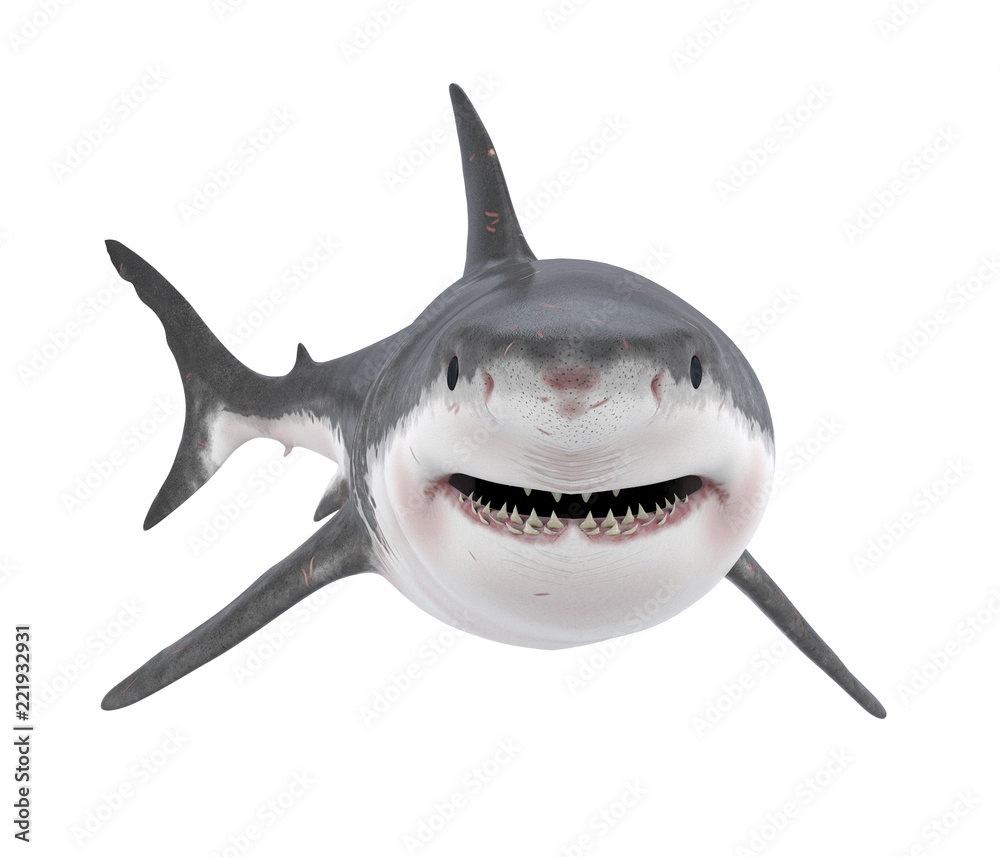 Great White Shark Isolated
