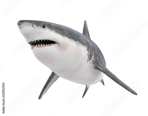 Fototapeta premium Wielki biały rekin na białym tle
