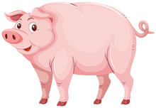Cute Pink Pig Character