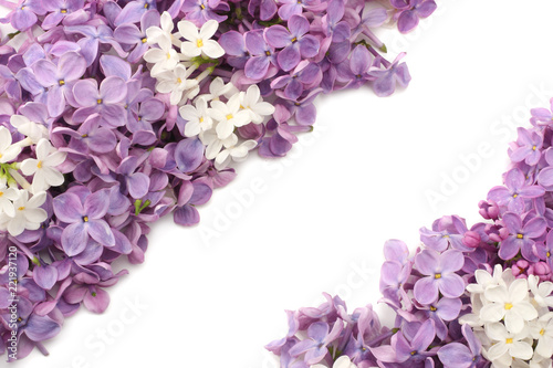 Tuinposter Lilac lilac flowers isolated on white background. top view