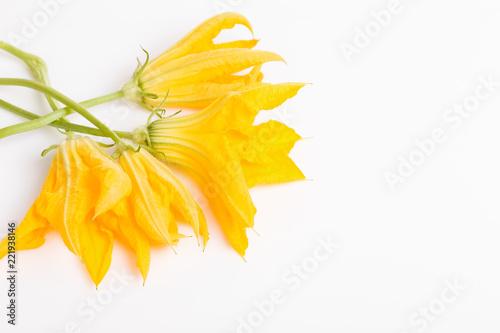 Fresh green zucchini or pumpkin flowers on white background. The concept of healthy eating, baby food, veganism, vegetarianism, raw food. Overhead top view, flat lay. Copy space.