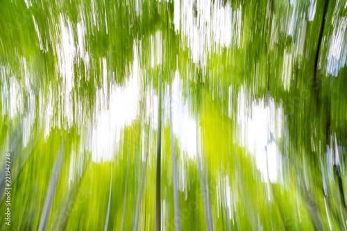 Fotografia, Obraz  Foresta di Bambù, kyoto
