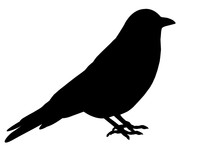 Black Silhouette Of Bird
