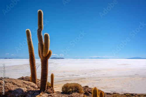Poster Centraal-Amerika Landen Big cactus in Incahuasi island, Salar de Uyuni salt flat, Potosi, Bolivia
