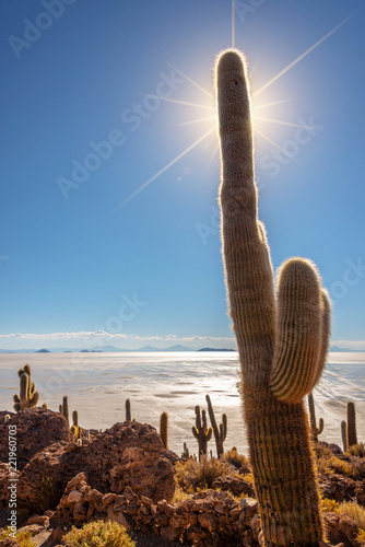 Papiers peints Cactus Big cactus in Incahuasi island, Salar de Uyuni salt flat, Potosi, Bolivia