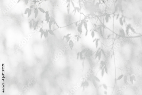 Gray shadow of natural leaves tree and tree trunk falling on white concrete wall for background design and wallpaper