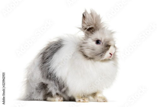 Angora rabbit, sitting against white background Wallpaper Mural