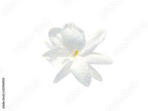 Close up of jasmine flower. Wallpaper Mural