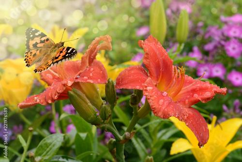 Schmetterling 469