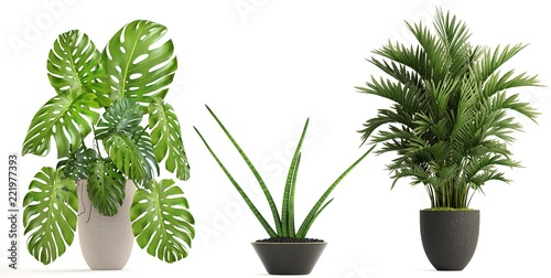Deurstickers Planten collection of ornamental plants in pots