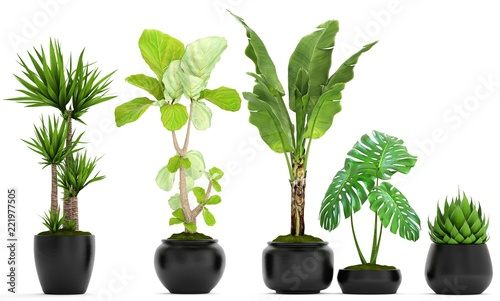 Foto op Canvas Planten collection of ornamental plants in pots