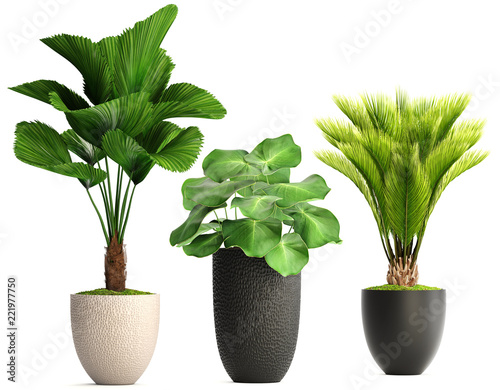 Poster Vegetal collection of ornamental plants in pots
