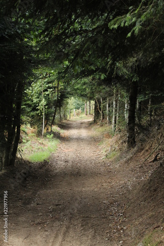 Tuinposter Weg in bos forêt
