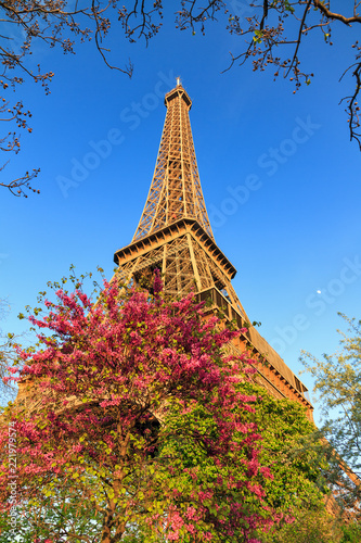 Deurstickers Eiffeltoren Beautiful vibrant view of spring blossom trees with the Eiffel tower in the background in Paris