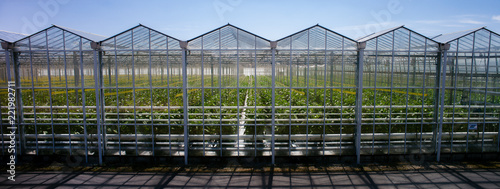 Greenhouse side by side from the outside - panorama germany Wallpaper Mural