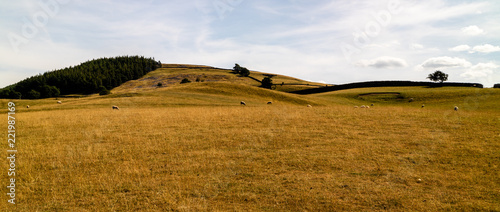Fotografie, Tablou Sheep eating grass and doing sheep things in the Yorkshire Dales