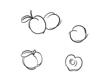 Vector Of Hand Draw Set Of Peach