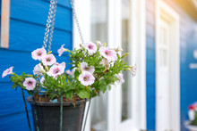 The Picture Of A House Painted Blue With White Doors And Windows Decorated With Pink Anemone Flowers Hanging In Front Of The House.