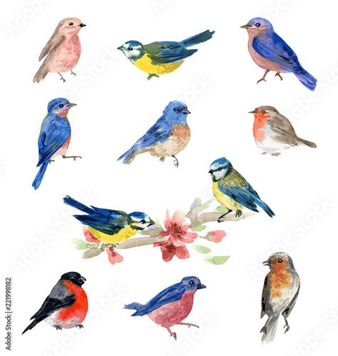 Watercolor bird illustrations Canvas Print