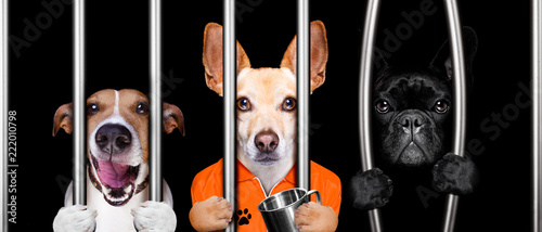 Deurstickers Crazy dog dogs behind bars in jail prison