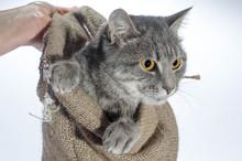 Cat In A Poke Gray Cat Color O...