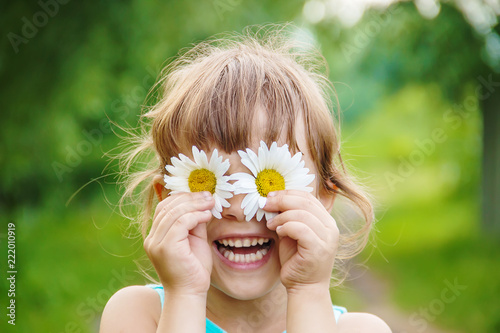 Obraz the girl is holding chamomile flowers in her hands. Selective focus. - fototapety do salonu